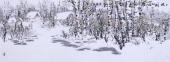 内蒙古美协张英浩小六尺国画精品《北国风光》